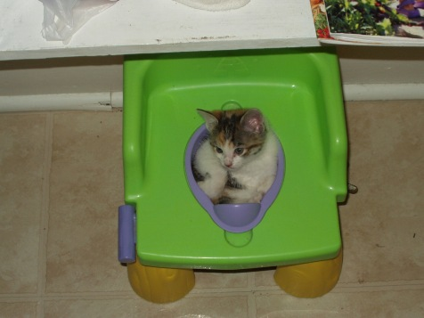 Our cat when she was a kitten. She loved this little 'chair'.