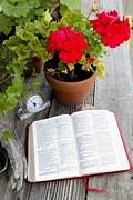 bible-1310889__180