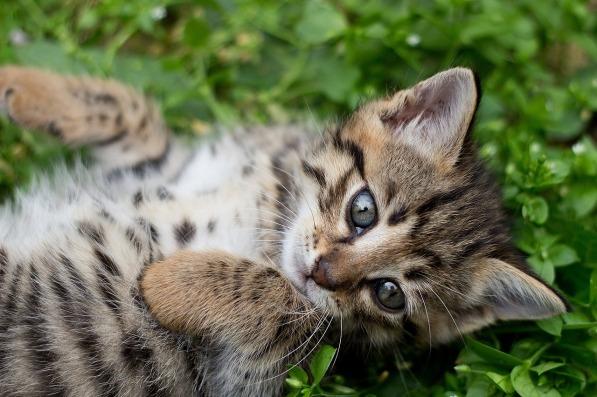 tabby-kitten-1517475_1280