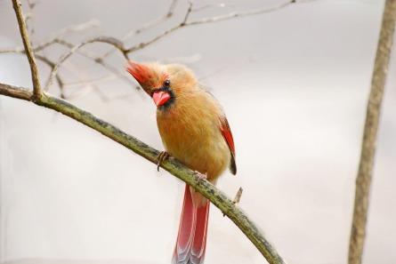 bird-1896377_1920