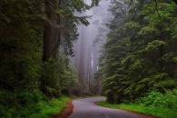 redwood-national-park-1587301_1280