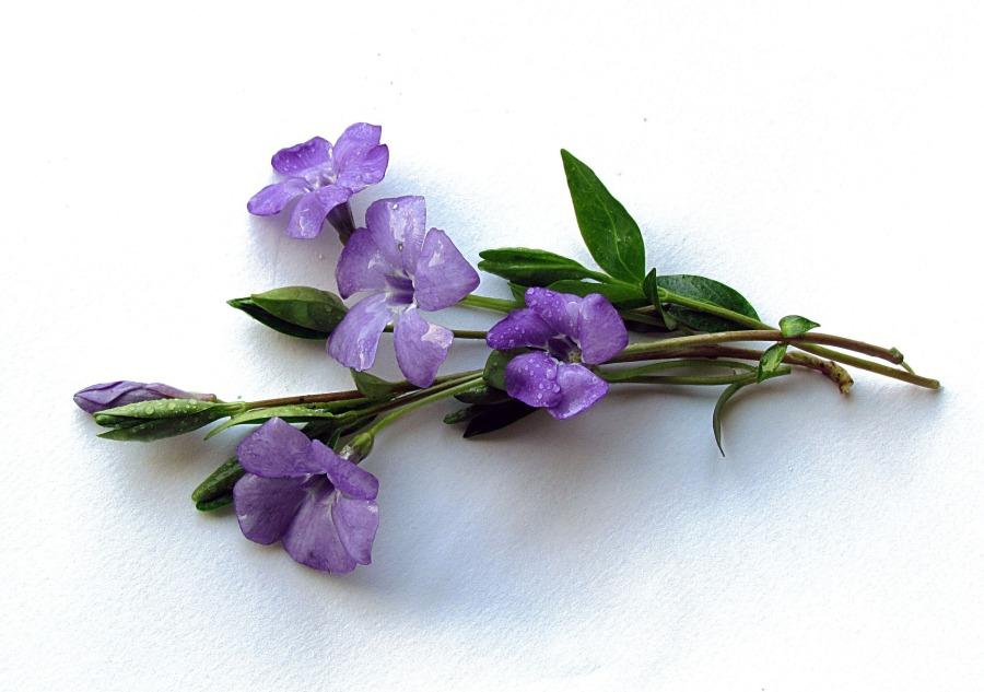 flowers-1265770_1920