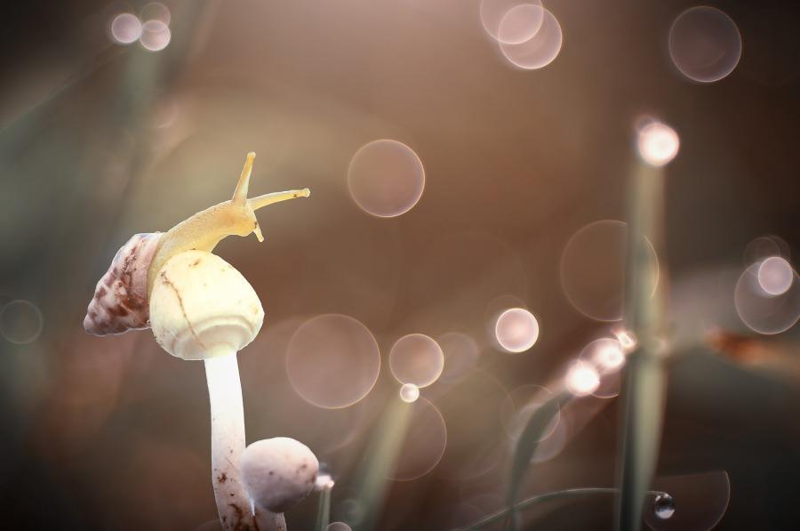 snail-2084656_1920