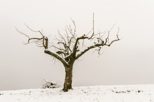 tree-3244491_1920