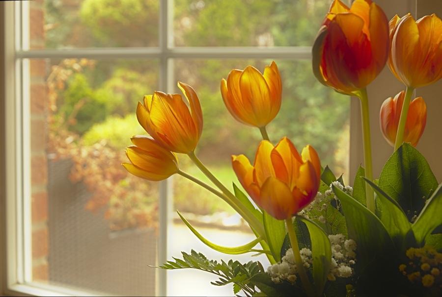 tulips-4927755